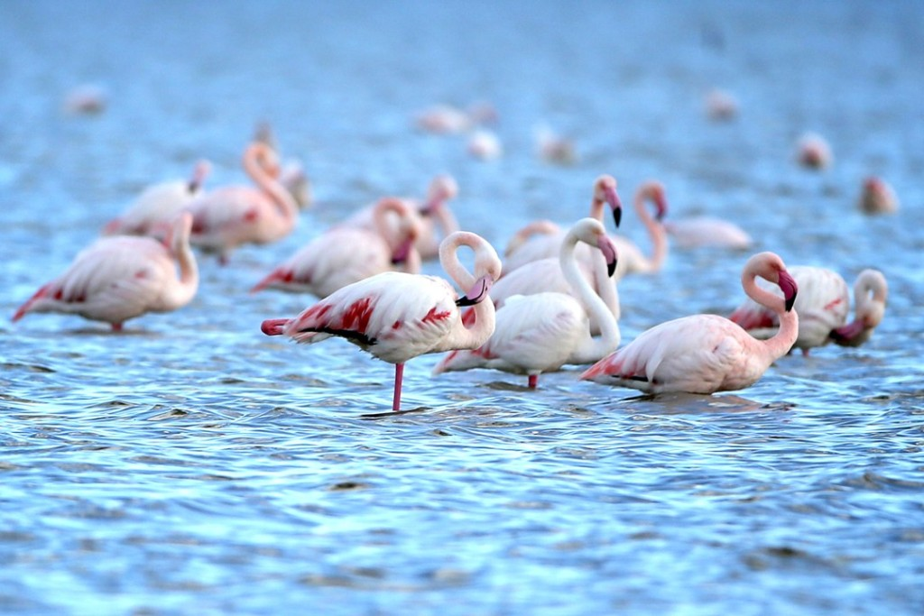 Flamingos-Vogue-4Dec15-Getty_b_1080x720